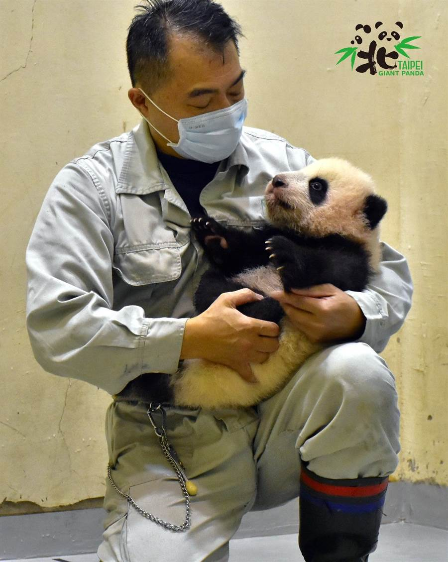 圓寶在媽媽圓圓和保育員的細心照顧下健康長大(圖/臺北市立動物園提供)