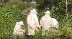 男子復興山區釣魚遭虎頭蜂螫 急救不治