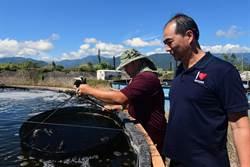 卸任台東縣副縣長張志明 推廣科技養蝦