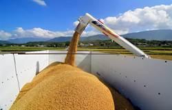 池上米稻穀收購價 每100台斤調漲100元 漲幅6%