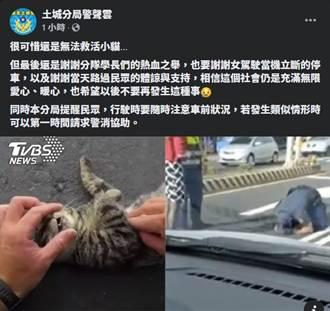 畫面曝光!浪貓過馬路遭撞 暖警當場跪地人工呼吸20分鐘網看哭
