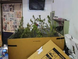 無業男自宅種植大麻搞宅經濟 難逃警方法網