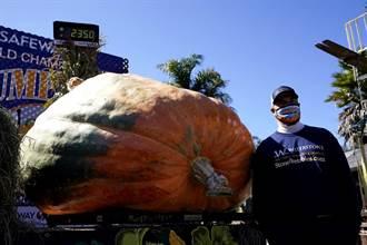 和人一樣大 每天狂澆水施肥 他種出1000公斤霸王級南瓜