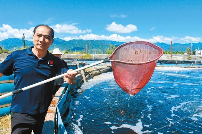 前台東縣副縣長張志明卸任後,在知本水產養殖區推廣科技養蝦。(莊哲權攝)