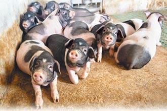 陸豬價下滑 跌破每公斤32元人幣