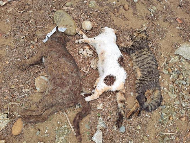 新豐鄉爆發毒貓狗案,多隻貓狗受害。(翻攝照片/莊旻靜新竹傳真)