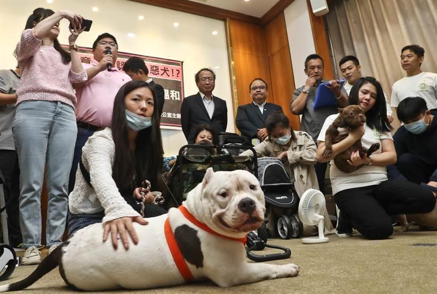 最近因比特犬引起的傷害事件,農委會於9月21日預告修正「指定禁止飼養、輸入或輸出之動物」(劉宗龍攝)
