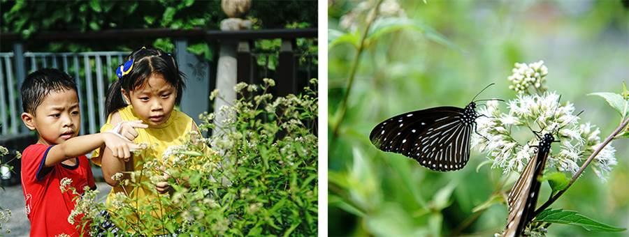 小朋友最期待的茂林雙年賞蝶季即將到來!(圖/曾信耀攝)