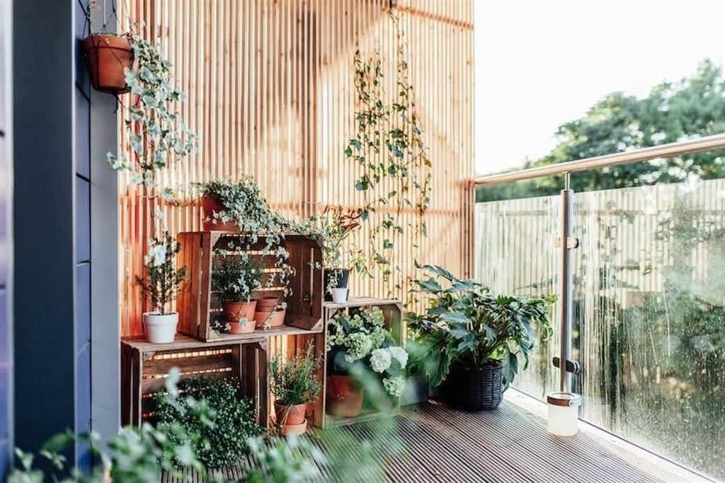 在家放鬆,怎能少了綠植相伴呢?