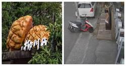 為拍巨大菠蘿踩爆木門!店家發文肉搜網美 昨日發聲道歉