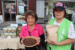 左鎮老農婦種咖啡30年 白堊土咖啡會回甘