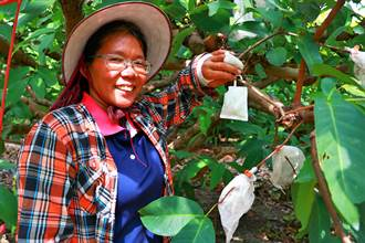 枋寮青農藉「蟲吃蟲」種蓮霧 天敵防治穩定收成又減成本