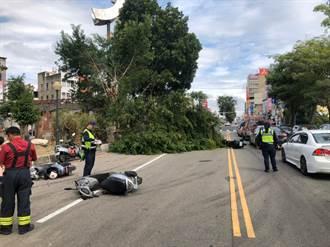 路樹倒塌!騎士遭壓、閃避摔車5人受傷