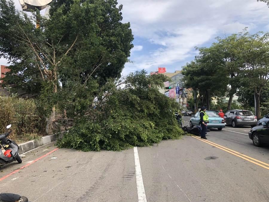 頭份市自強路與中華路口路樹突然倒塌引發車禍,造成4、5人受傷。(民眾提供/何冠嫻苗栗傳真)