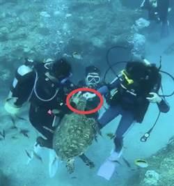摸海龜不夠 小琉球1男1女餵海龜被法辦