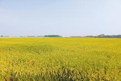 民生、工業用水需求增 農民憂