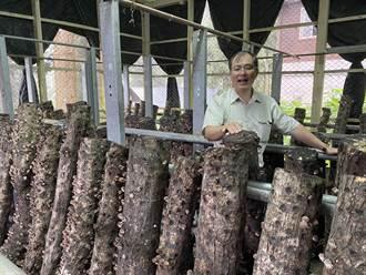 台大實驗林推林下經濟 段木香菇一台斤200元