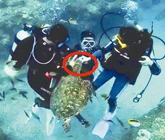 餵小琉球海龜 2潛水客送辦
