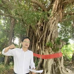 市議員張耀中為老樹請命 批所有權人要修剪須自費、自提計畫