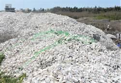 澎湖養殖綠色新科技 廢棄牡蠣殼變身風螺養殖的珊瑚底砂