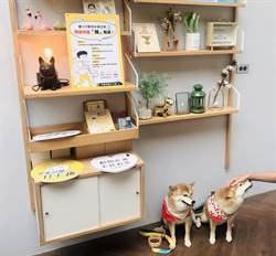 北市動保處 開辦10大寵物主題課程報名起跑