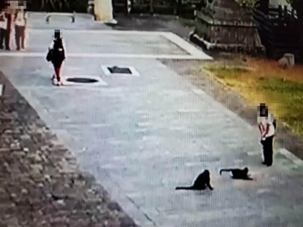 女學生嚇得往後退。(淵明國中提供錄影帶)