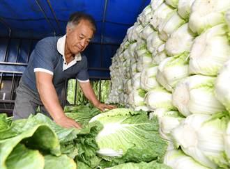 韓國泡菜危機大陸受惠 一行業2季暴增9萬家公司