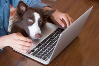 哪一種狗最聰明?網狂推「牠」:智商等同6歲童