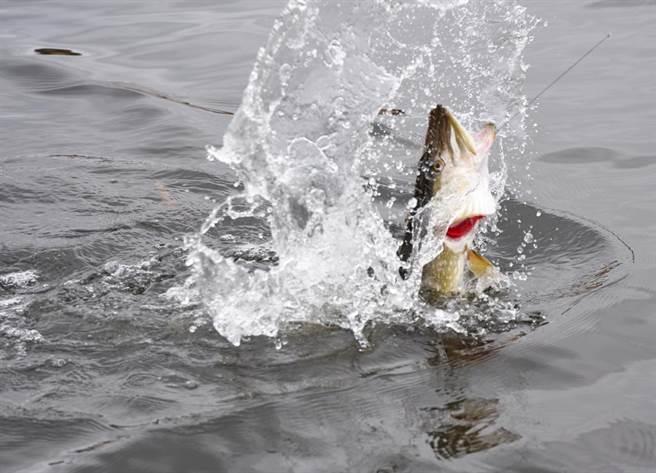釣客示意圖。(圖/達志影像)