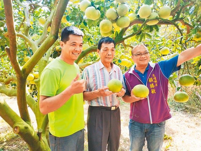 花壇鄉長顧勝敏(右)協助山富果園推廣西施柚。圖/業者提供