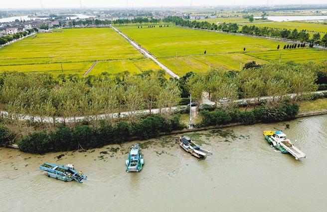 長三角生態綠色一體化發展示範區的蘇浙滬交界水域太浦河流域。(新華社資料照片)