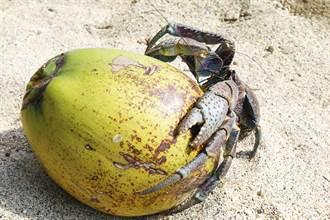 琉璃蟻、象魚、魚虎是什麼?十大熱搜動物原來溫和的牠會咬斷人手