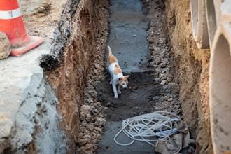 小貓跌落激流深溝困石上狂發抖 3男「合體倒掛」超暖救援