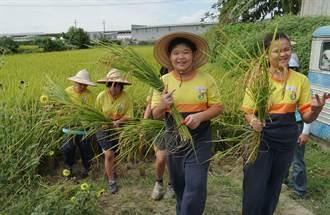 草湖市民農園辦學童割稻趣 體驗農夫辛苦