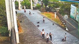 獼猴大軍 校門口圍攻學生