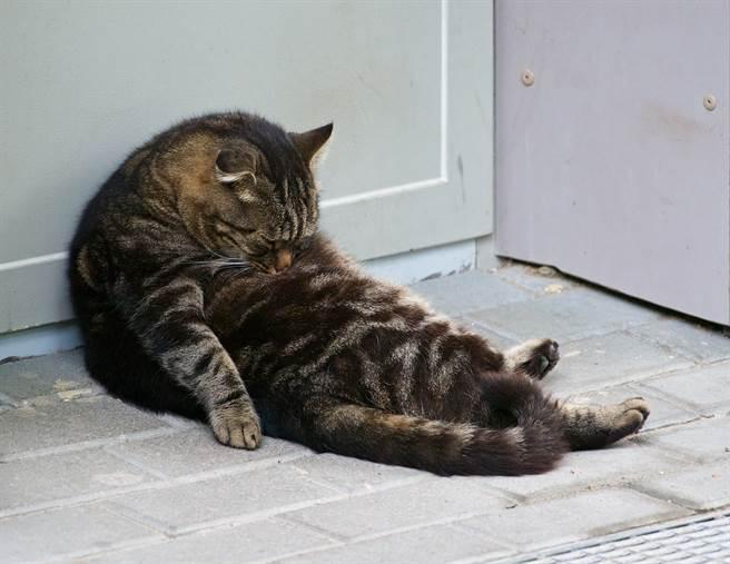 「次郎山」宛如喝醉酒的大叔,癱倒在沙發上狂度估(示意圖/達志影像)