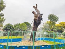 養護老樟樹 樹醫反對開挖監測