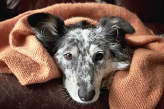 愛犬被獨留在家「趴窗等10小時」 主人下班看監視器淚崩