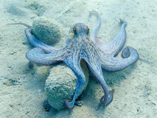 超軟Q章魚「咻一下直接隱形」10秒療癒片流出