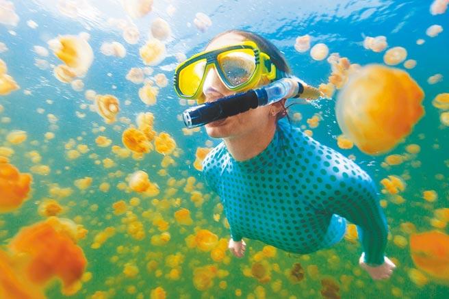 帛琉擁有全世界唯一的無毒水母湖。(東南旅遊提供)