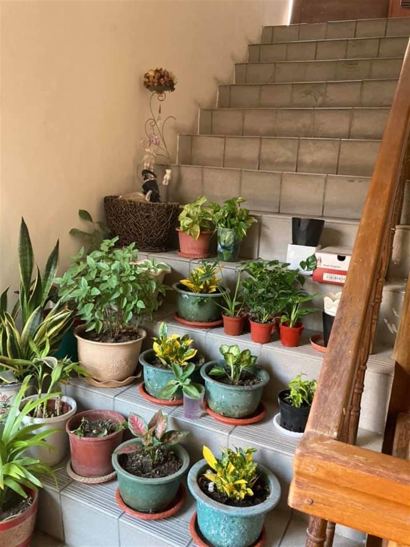 一位網友爆料,家裡公寓大樓逃生梯竟被鄰居改建成專屬的「開心農場」,樓梯間盡是堆滿了盆栽植物,樓梯被佔滿到連路都沒辦法走。(摘自爆怨2公社)