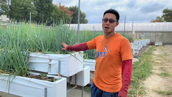 青農黃畯和指出,高架草莓園裡種蔥可驅蟲,蔥作物收成可販售。(巫靜婷攝)