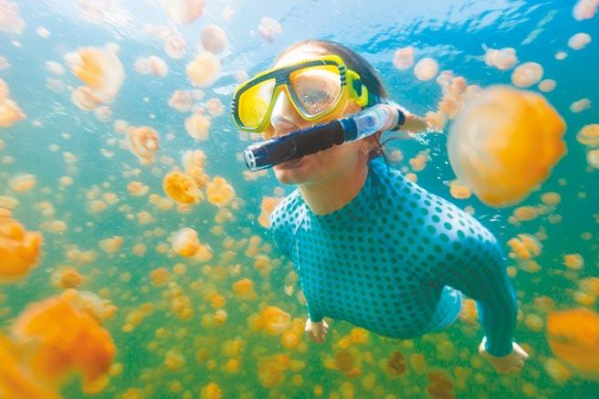 台帛旅遊泡泡暫緩實施,若要重啟協商,至少要等到帛琉選出新總統後。圖為帛琉的「無毒」水母湖。(東南旅遊提供)