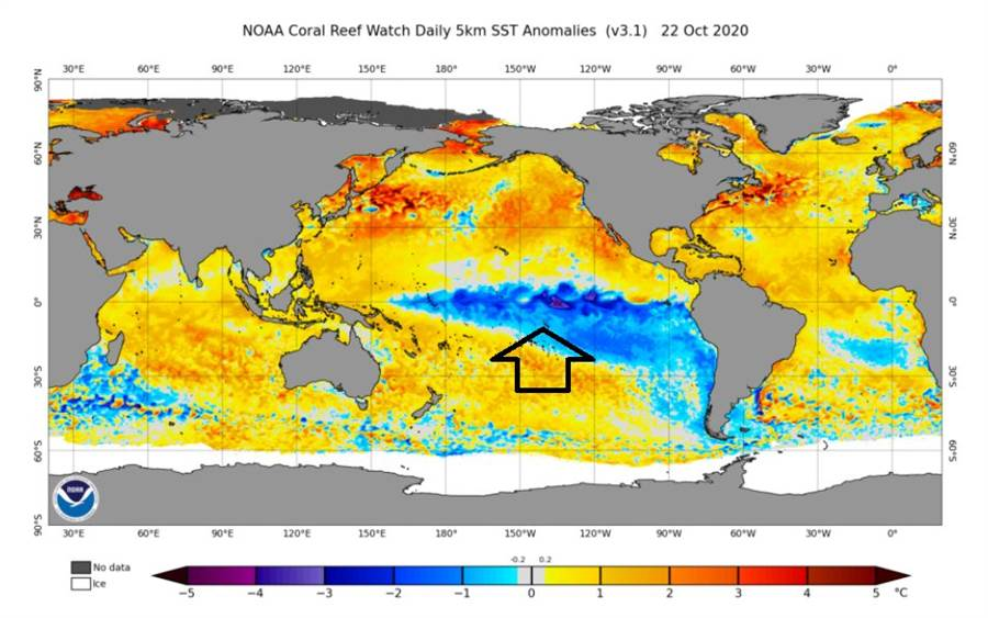 太平洋赤道區的冷海水也就是藍色部分很明顯,是反聖嬰現象的特徵,使溫度對比再增大,一直有颱風冒出來。(翻攝自 鄭明典臉書)