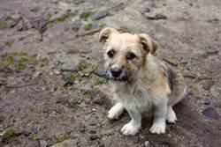 愛犬失蹤26天奇蹟現身 徒步60公里坐家門前搖尾巴主人噴淚
