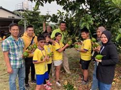 南師附小與華醫國際生體驗酪梨食農教育