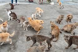 悚!貓島沒遊客鬧飢荒 小貓不會狩獵竟開始「貓吃貓」