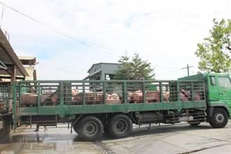 台中肉品市場轉型 養豬大縣溪湖肉品市場吸納