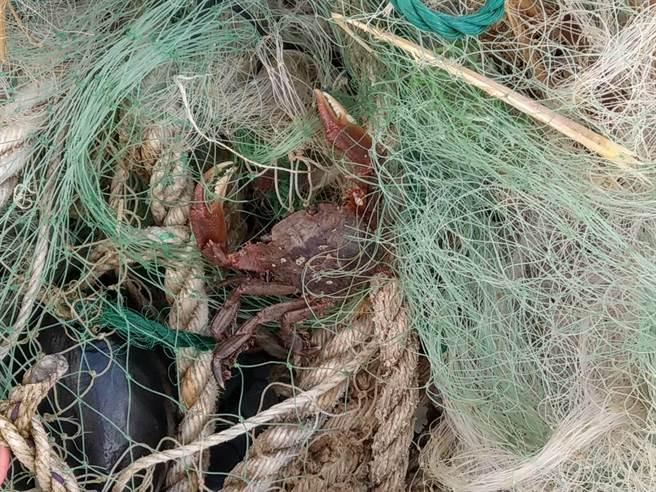 國立海洋科技博物館結合基隆在地師生團隊,針對海廢與微塑膠問題進行科學探究,過程中發現廢棄漁網纏繞著螃蟹。(國立海洋科技博物館提供/陳彩玲基隆傳真)