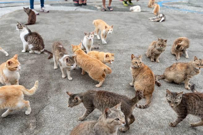 悚!貓島沒遊客鬧飢荒 小貓不會狩獵竟開始「貓吃貓」(示意圖/達志影像)